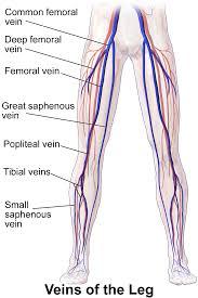 venous-conditions-require-vascular-surgeon-01